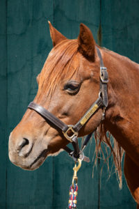 a photo of tulip the horse
